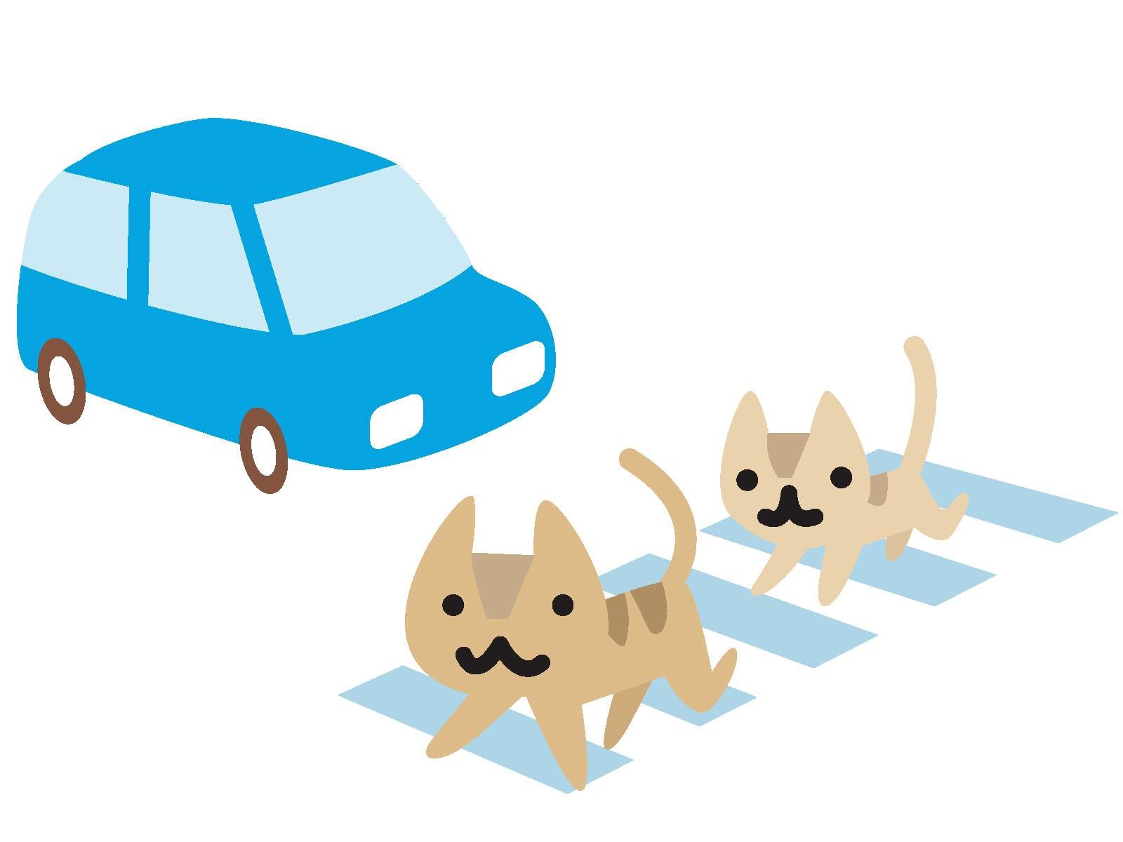 【安全運転】教習所では教えてくれない無事故の秘訣。その神髄とは?
