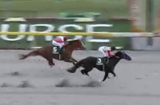 【根岸ステークス】カフジテイクの連覇に待ったをかけるのはどの馬か