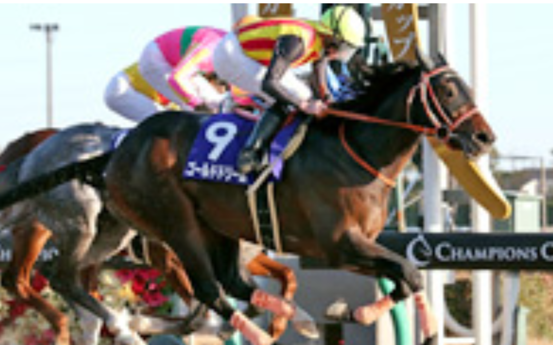 【フェブラリーステークス】ゴールドドリームが中央ダートGI3連覇に挑む